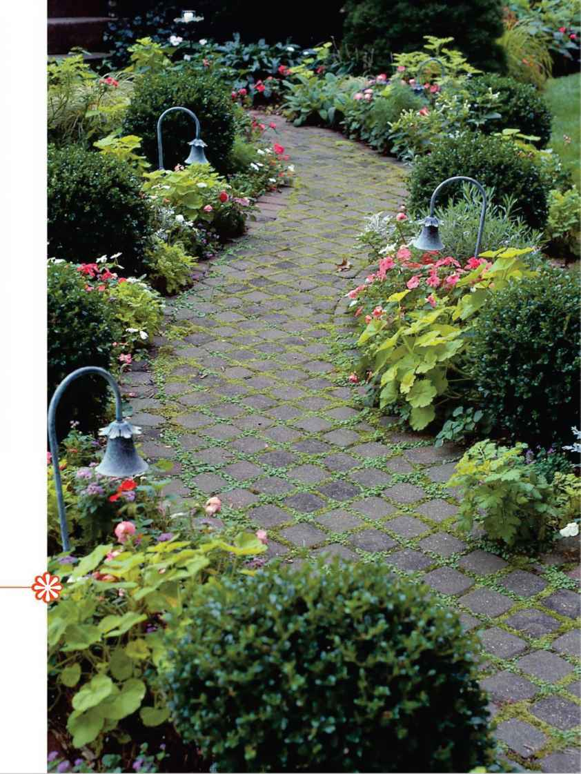 How to plant ground cover between pavers - Growing Moss Between Pavers