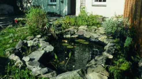 Shaded Pond Design