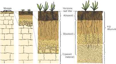 Stages of soil formation horticulture guide for Meaning of soil formation