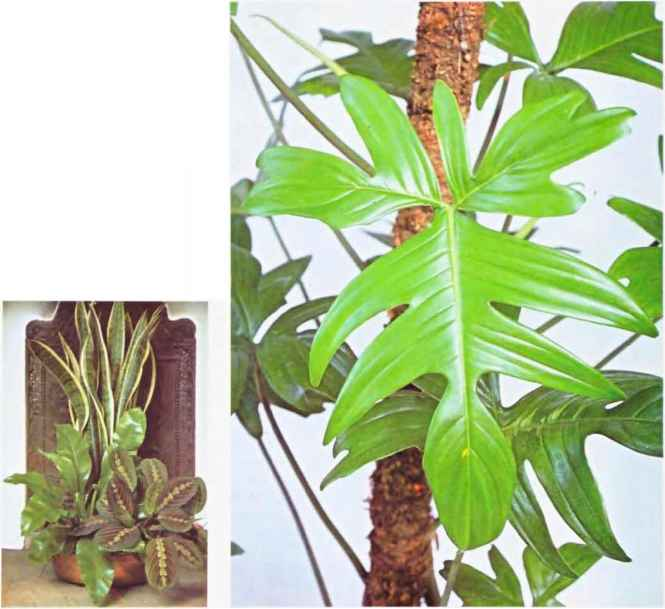 Pictures of foliage house plants