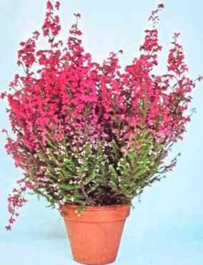 Common Cactus Houseplants