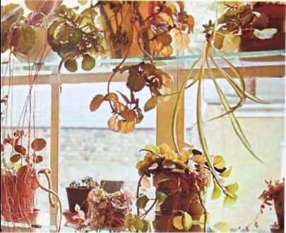Houseplants Photos