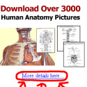 [Special Offer] Human Anatomy & Physiology Premium Course + Bonuses