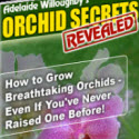 Orchid Secrets Revealed