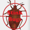 Stink Bug Control Secrets