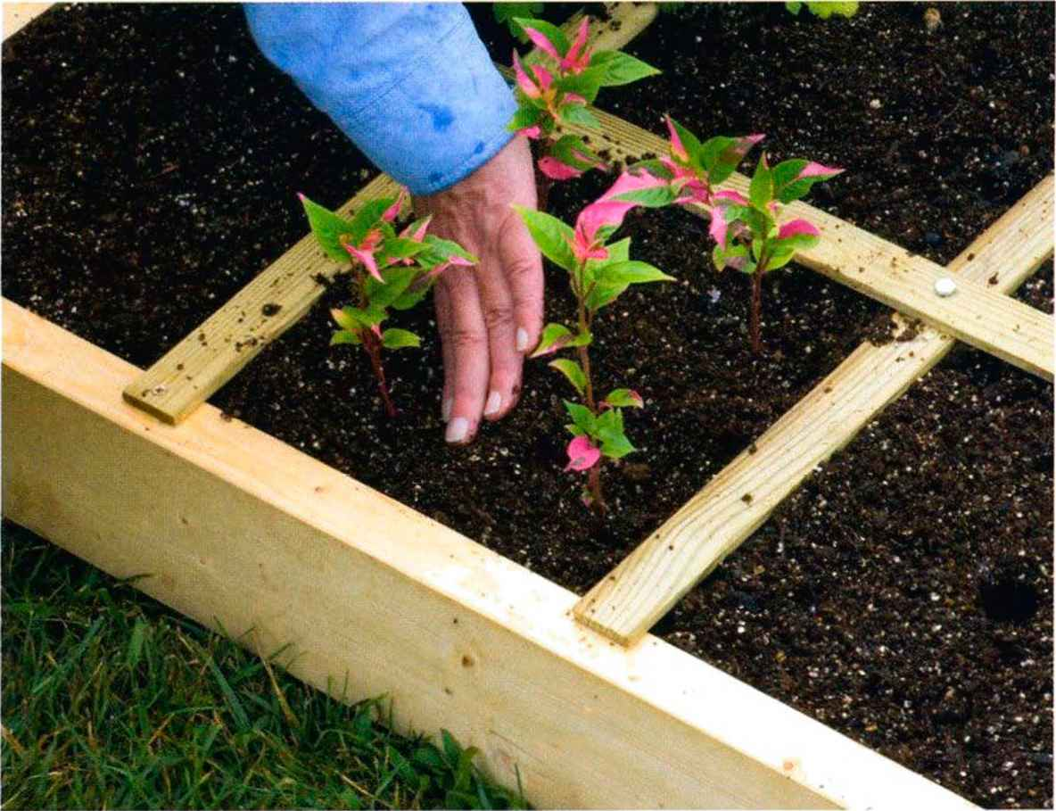 Square Foot Gardening Plant Spacing