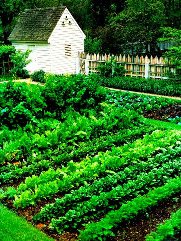 Good Vegetable Garden Layout