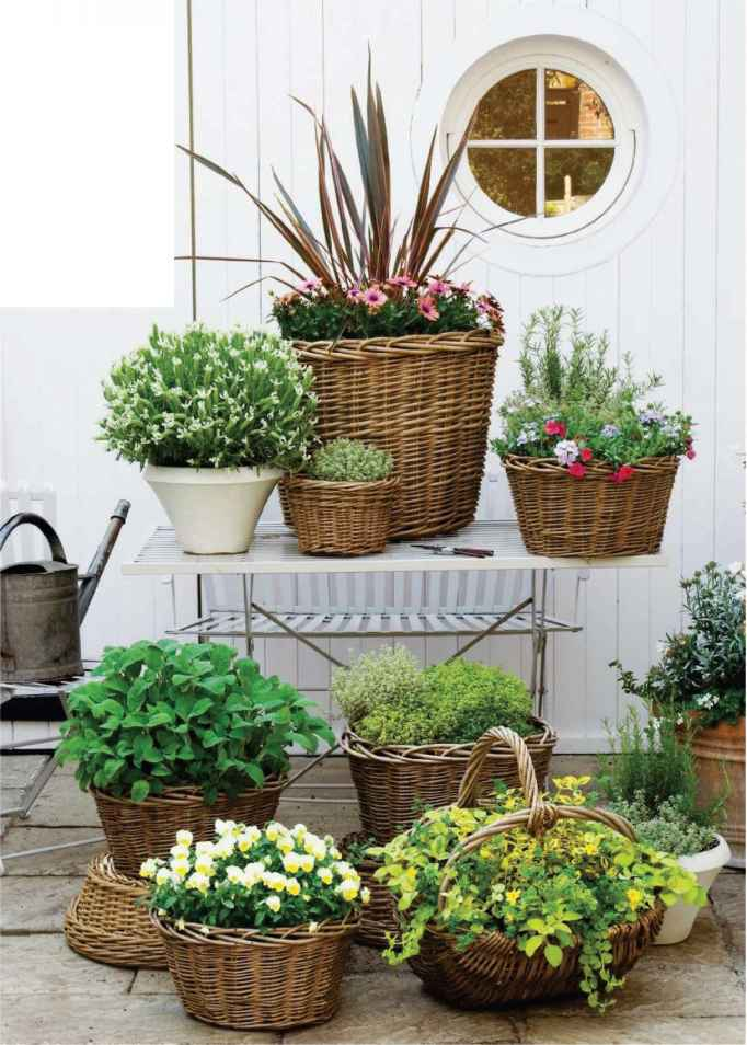 Mix Potted Plants