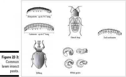 Garden Pests Beetles Images