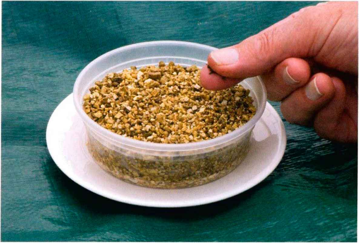Indoor Seed Sprouting - Square Foot Gardening