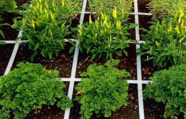 mel bartholomew square foot gardening pdf