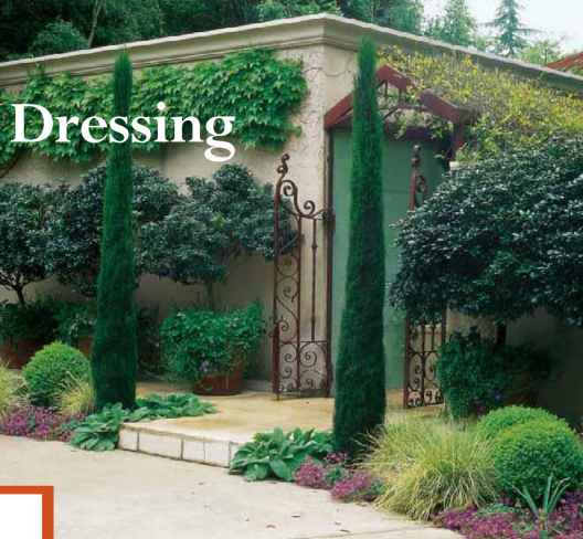 Landscaping With Italian Cypress