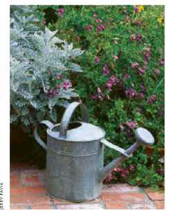 Metal Watering Cans For Sale