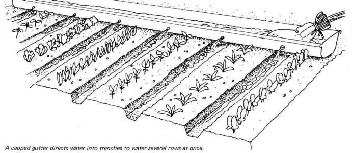 Watering Vegetable Garden