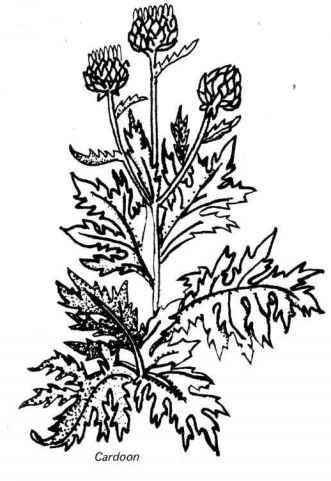 candoon vegetable gardening florence grovida gardening Vegetable Garden Spacing for Square Foot Collard Greens